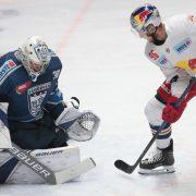 """Ein Goalie und ein """"Sniper"""" belegen zwei weitere Kontingentstellen bei den Lausitzer Füchsen"""